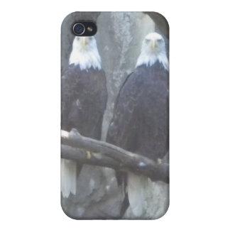 Bald Eagle Pair iPhone4 case iPhone 4/4S Cases