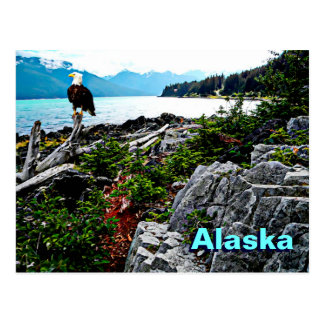 Bald Eagle Perched On Alaska Coast Postcard
