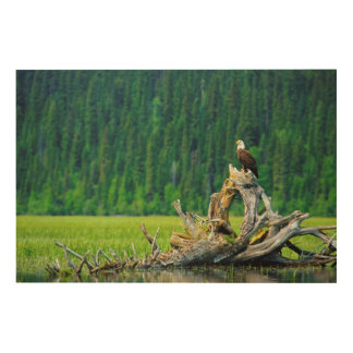 Bald Eagle Perched On Branch Wood Wall Decor