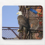 Bald Eagle Perched on Crab Pots