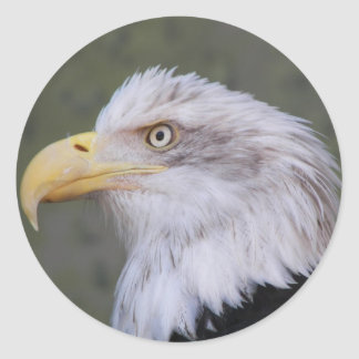 Bald Eagle Photo Classic Round Sticker