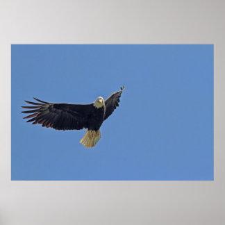 Bald Eagle Photo Print