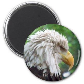 Bald Eagle Photography 6 Cm Round Magnet