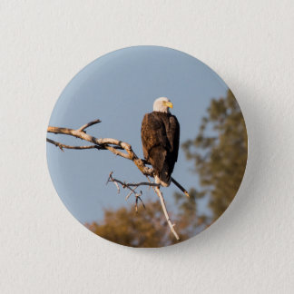 Bald Eagle pin back button. 2.25 inches