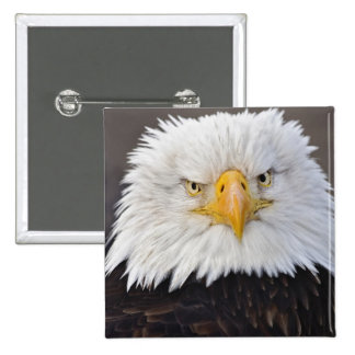 Bald Eagle Portrait, Bald Eagle in flight, 15 Cm Square Badge
