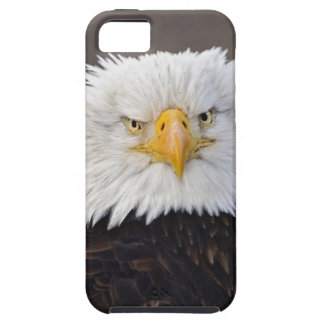 Bald Eagle Portrait, Bald Eagle in flight, iPhone 5 Cover