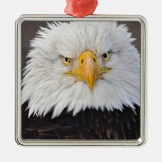 Bald Eagle Portrait, Bald Eagle in flight, Silver-Colored Square Decoration