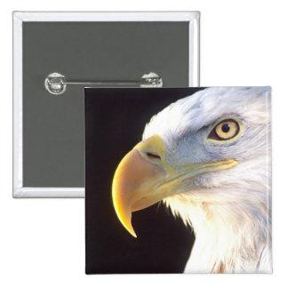 Bald Eagle Portrait, Haliaeetus leucocephalus, 15 Cm Square Badge
