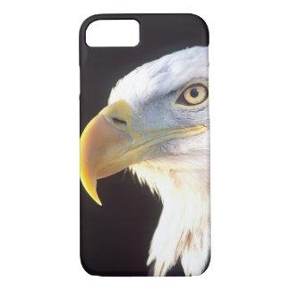 Bald Eagle Portrait, Haliaeetus leucocephalus, iPhone 8/7 Case