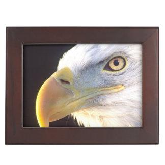 Bald Eagle Portrait, Haliaeetus leucocephalus, Keepsake Box