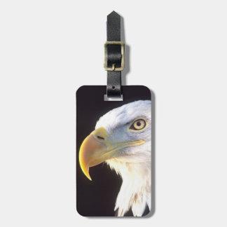 Bald Eagle Portrait, Haliaeetus leucocephalus, Luggage Tag