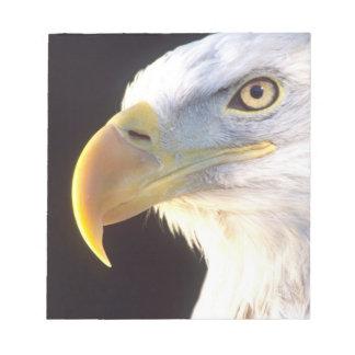 Bald Eagle Portrait, Haliaeetus leucocephalus, Notepad