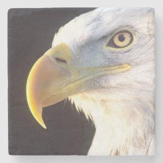 Bald Eagle Portrait, Haliaeetus leucocephalus, Stone Coaster
