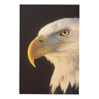 Bald Eagle Portrait, Haliaeetus leucocephalus, Wood Wall Decor