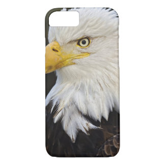 Bald Eagle portrait, Haliaetus leucocephalus, iPhone 8/7 Case