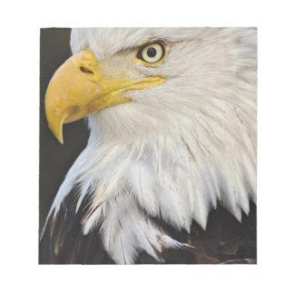 Bald Eagle portrait, Haliaetus leucocephalus, Notepad