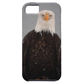 Bald Eagle Portrait in the Snow, Haliaeetus iPhone 5 Cover