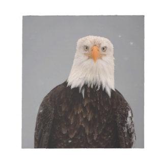 Bald Eagle Portrait in the Snow, Haliaeetus Notepad