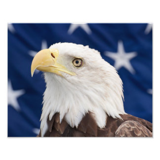 Bald Eagle Portrait with stars Art Photo