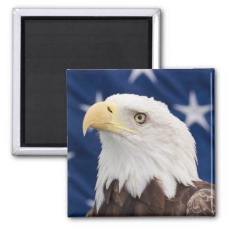 Bald Eagle Portrait with stars Refrigerator Magnet