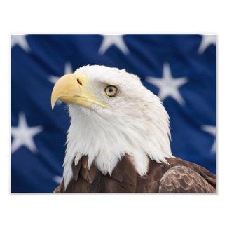 Bald Eagle Portrait with stars Photo