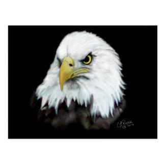 Bald Eagle Postcard 2