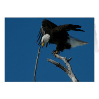 Bald Eagle preparing to prey Greeting Card