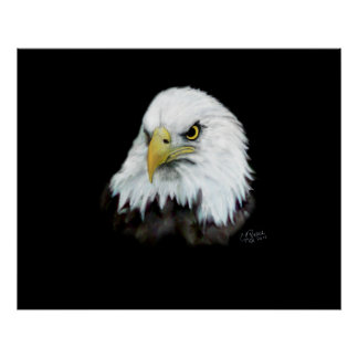 Bald Eagle Print / Poster