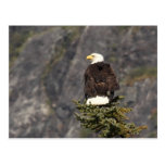 Bald Eagle Products Postcards