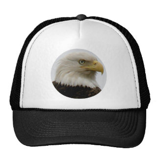 Bald Eagle Profile Photo on Unalaska Island Cap