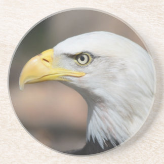 Bald Eagle Raptor Bird of Prey Coaster