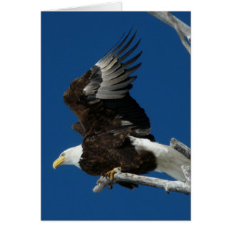 Bald Eagle ready to fly Greeting Card