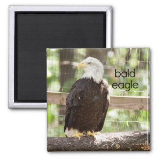 Bald Eagle Refrigerator Magnet