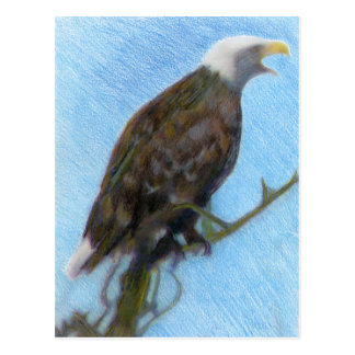 Bald Eagle Screaming in a Tree Post Card