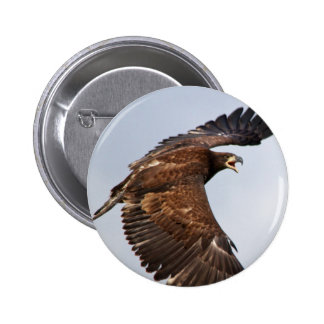 Bald Eagle Shouting Feed Me at an adult 6 Cm Round Badge