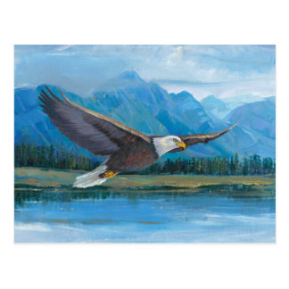 Bald Eagle Soaring Postcard