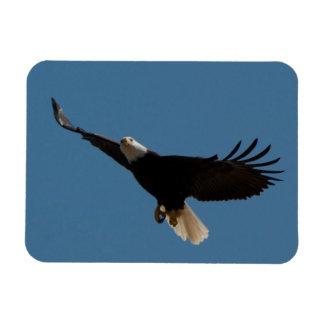 Bald Eagle Soaring Rectangular Photo Magnet