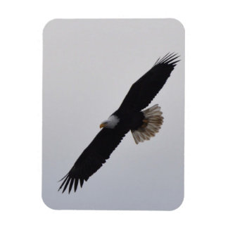 Bald Eagle Soaring Rectangular Photo Magnet