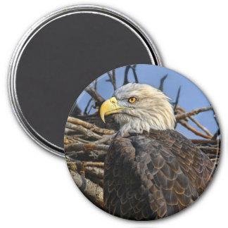 Bald Eagle Spring Nest Magnet