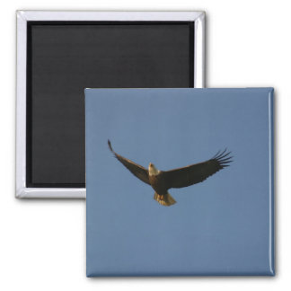 Bald Eagle Square Magnet