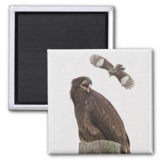 Bald Eagle (Stop body slamming me) Fridge Magnet