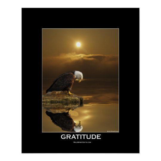 Bald Eagle & Sunlight Poster