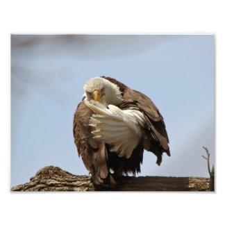 Bald Eagle (The bird giving the bird) Photographic Print