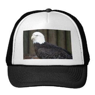 bald eagle two4x6 cap