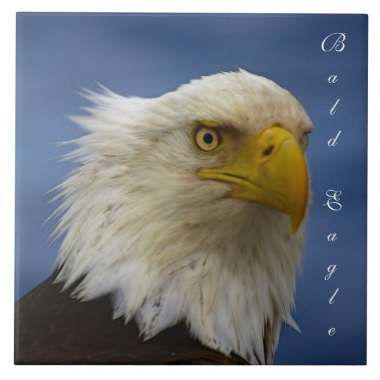 Bald Eagle Wildlife Photo Gift Tile or Trivet