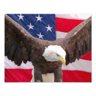 Bald Eagle with the American Flag Print Photograph