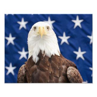 Bald Eagle with the Stars Art Photo
