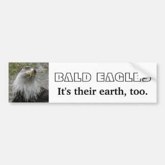 Bald Eagle, Young Adult Bumper Stickers