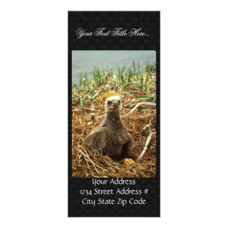 Bald Eagle Young in Nest Customized Rack Card