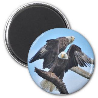 Bald Eagles 6 Cm Round Magnet